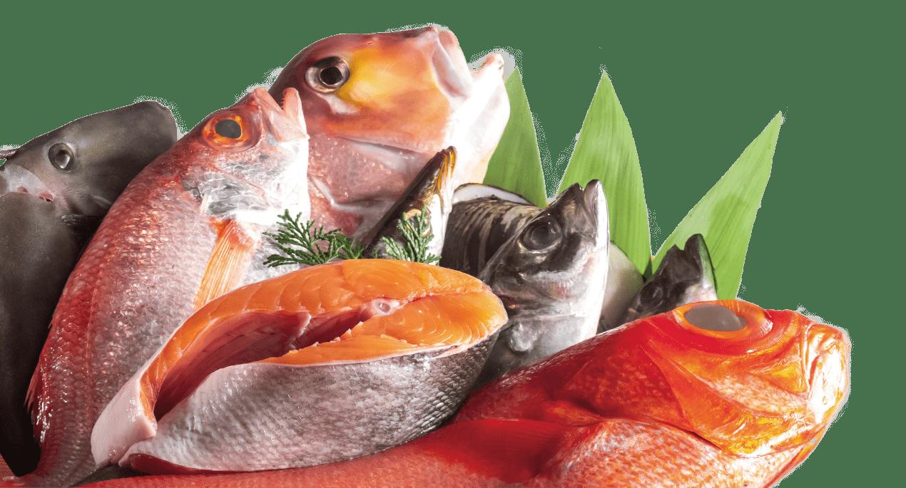 漁港直送の厳選された食材